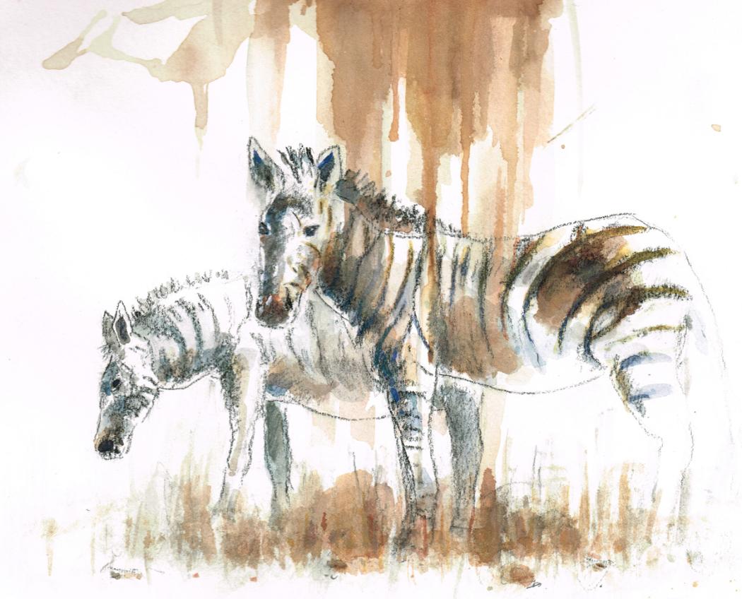 Zebres au Kenya - 2012
