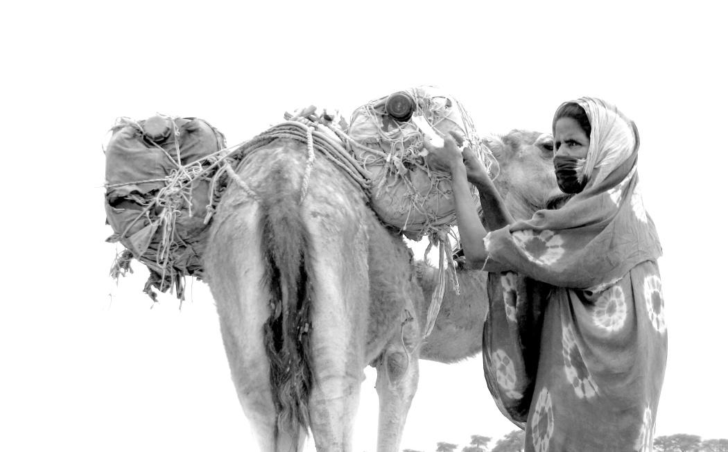 Photo noir et blanc, un autochtone charge un dromadaire
